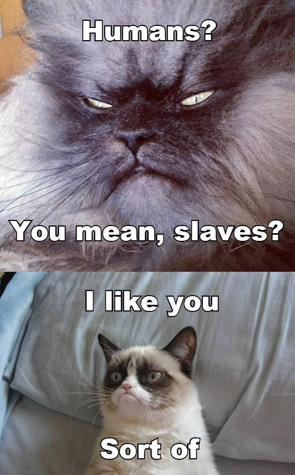 Humans? You mean slaves?