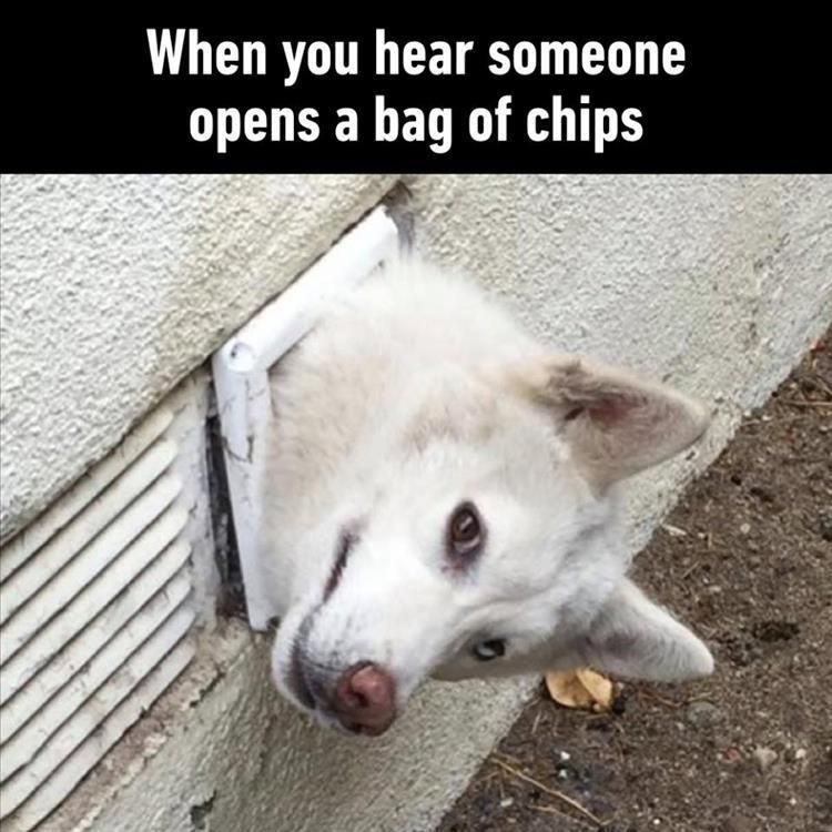 When you hear someone opens a bag of chips