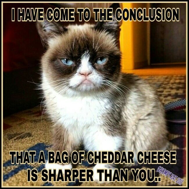 I have come to conclusion that a bag of cheddar cheese is sharper than you.