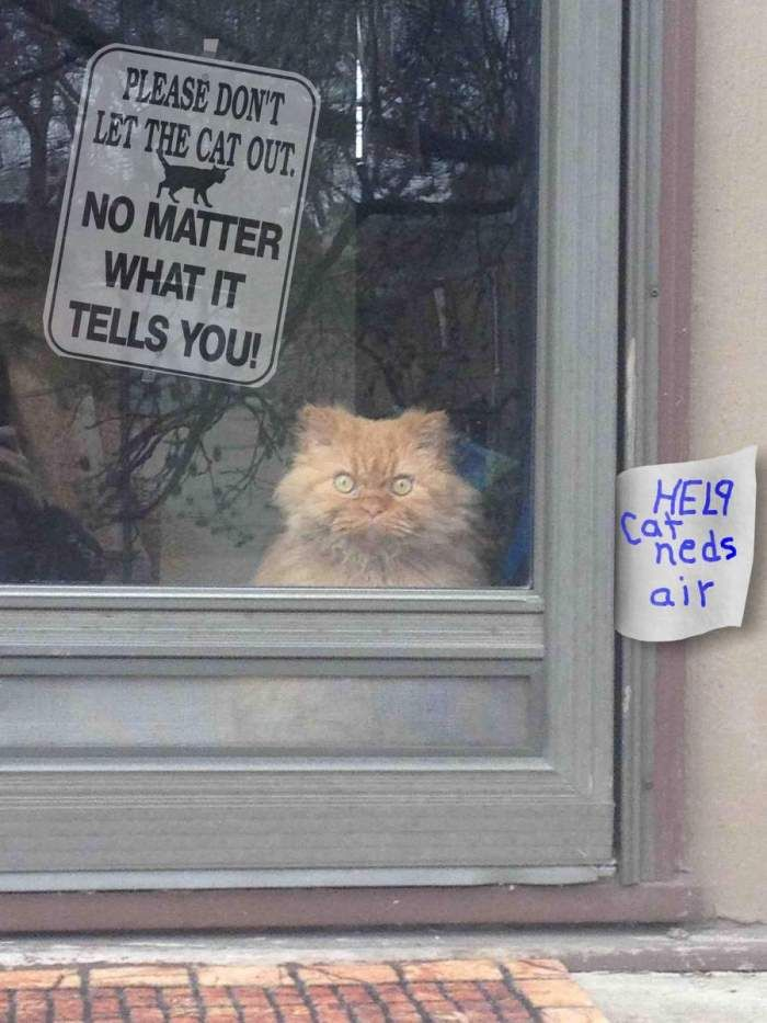 Please don't let the cat out. No matter what it tells you.