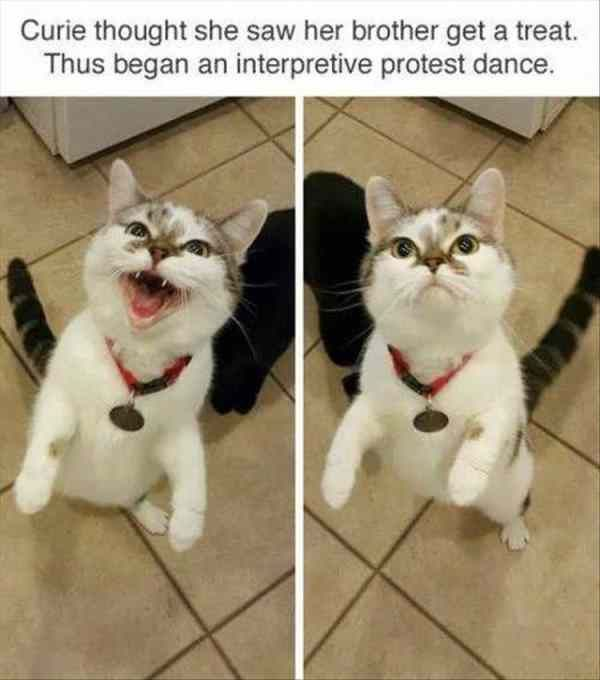Curie thought she saw her brother get a treat. Thus began an interpretive protest dance.